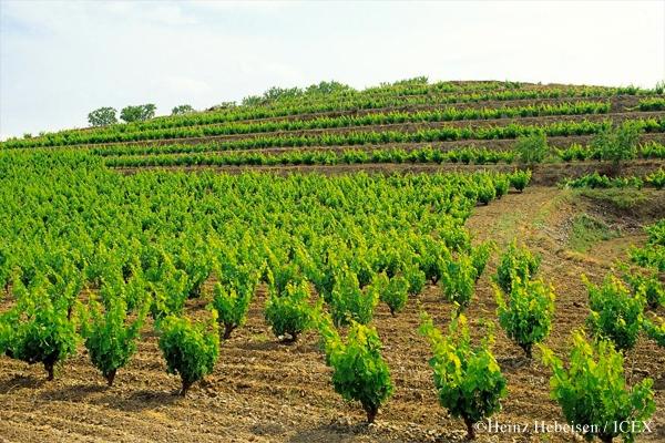 西班牙葡萄酒地圖(一):加泰隆尼亞地區