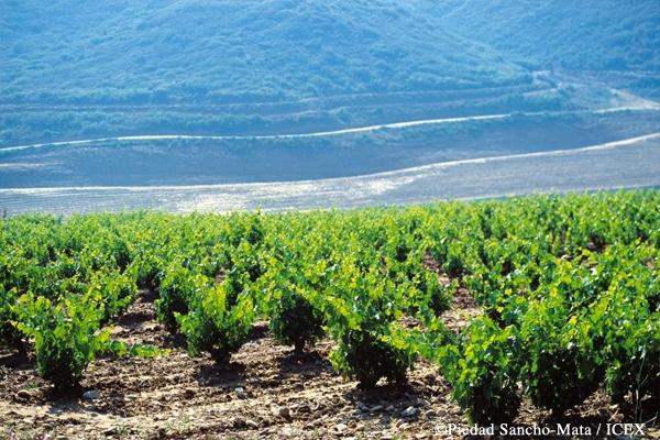 西班牙葡萄酒地圖(七):西北大西洋岸地區