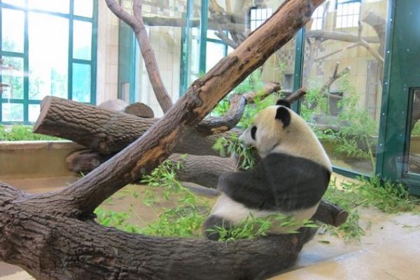 重返維也納:傷心動物園半日遊