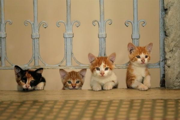 每週影評|《愛貓之城》:何其有幸當個愛貓人
