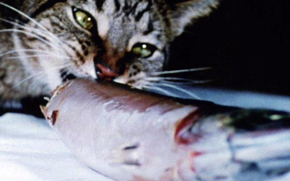 她的貓正在吃魚,卻傳來海浪的聲音——在 TIDF 看七〇年代導演的前衛代表作